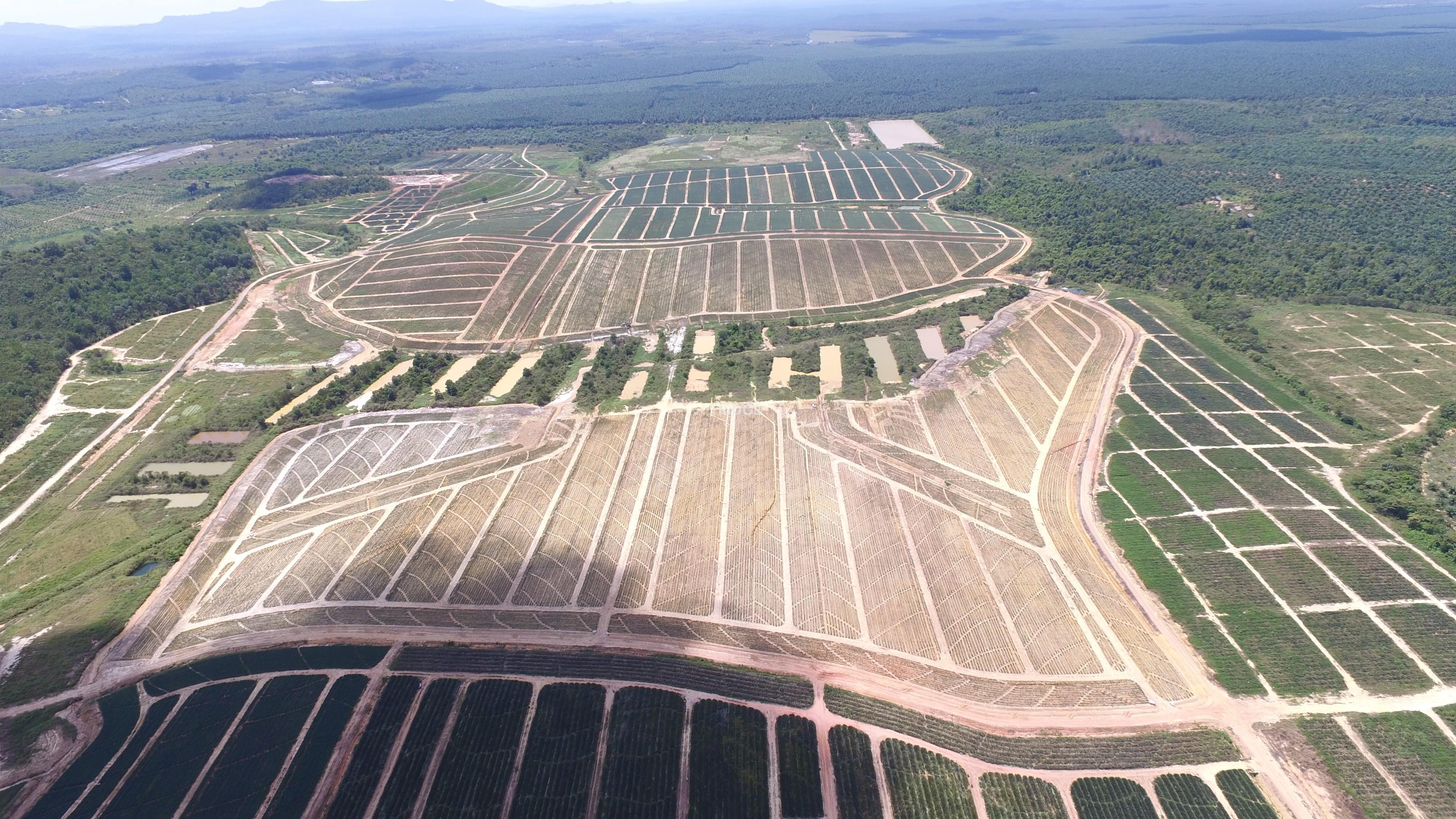 ROMPINE Plantation