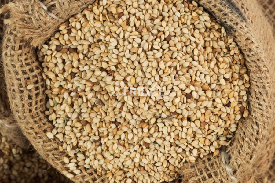 jahjum import and export