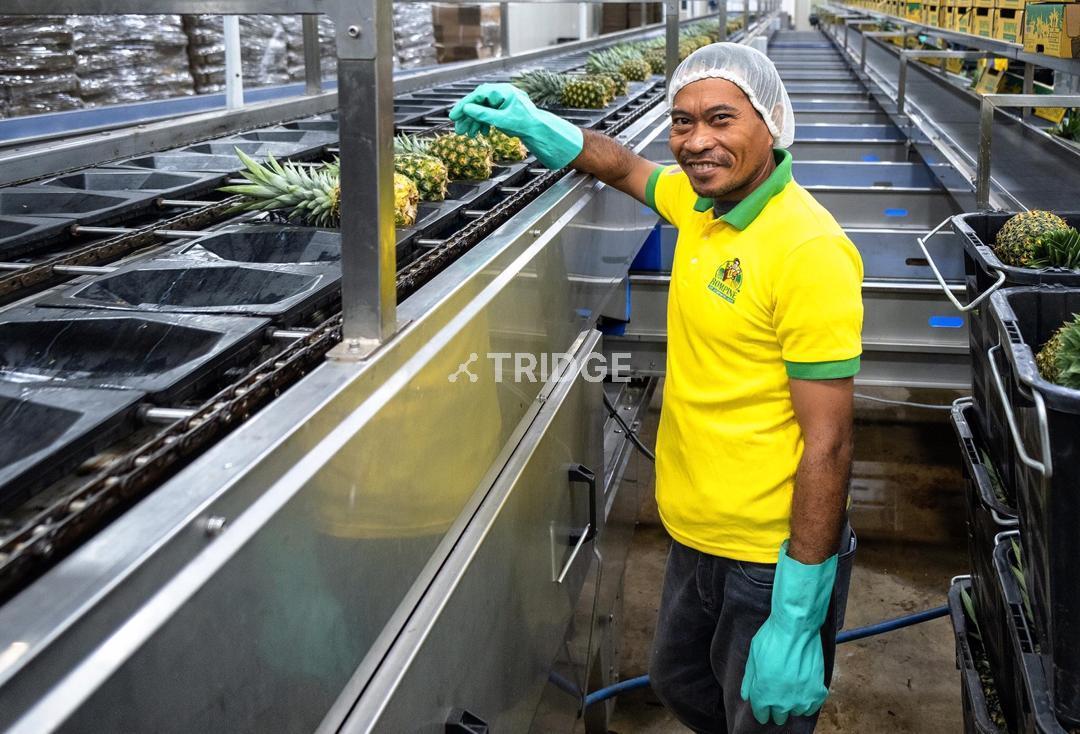 Automatic Pineapple Sorting Machine