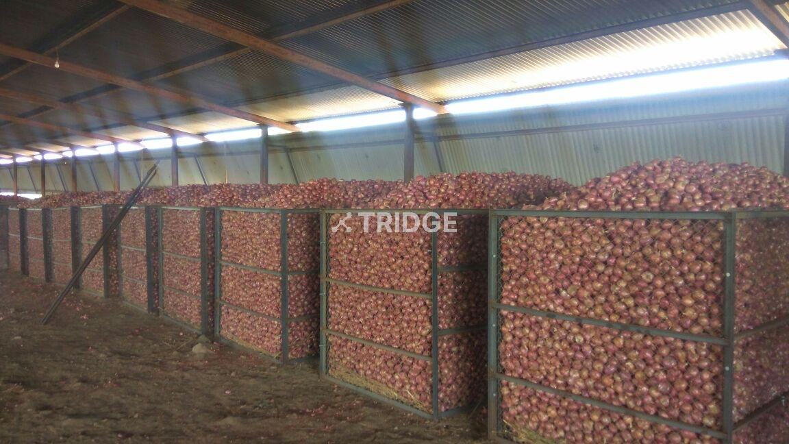 Onions Storage
