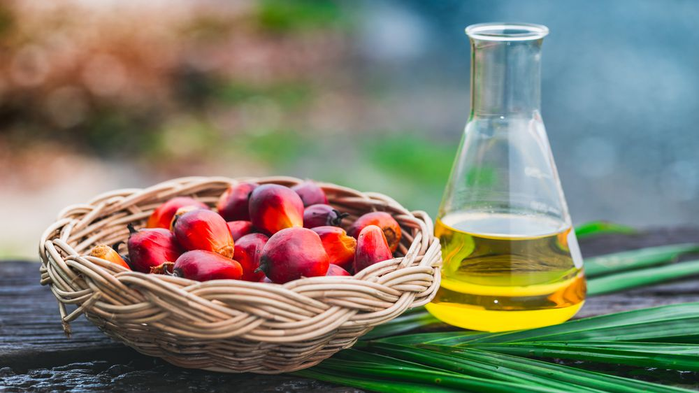 Global Palm Oil Prices Rise to Nine-Year High in 2021 - Tridge