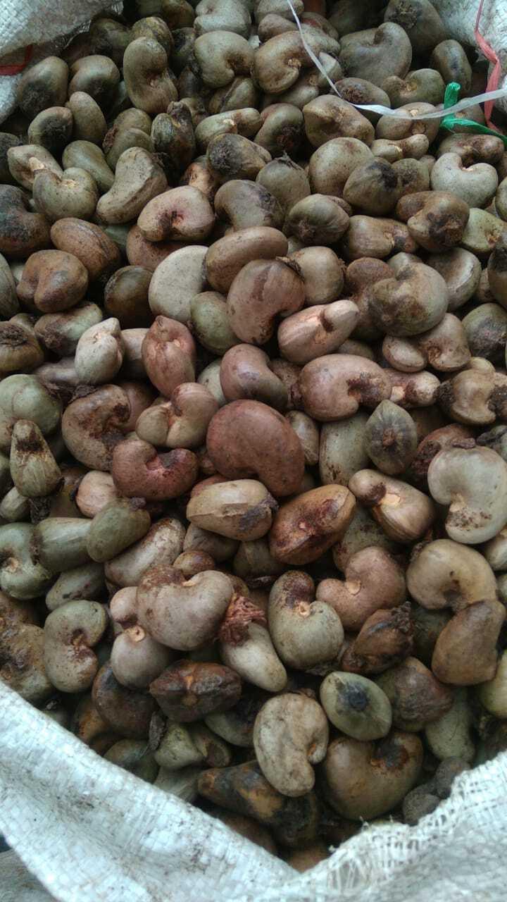 Indonesia Raw Cashew Nut - RCN-01.jpeg