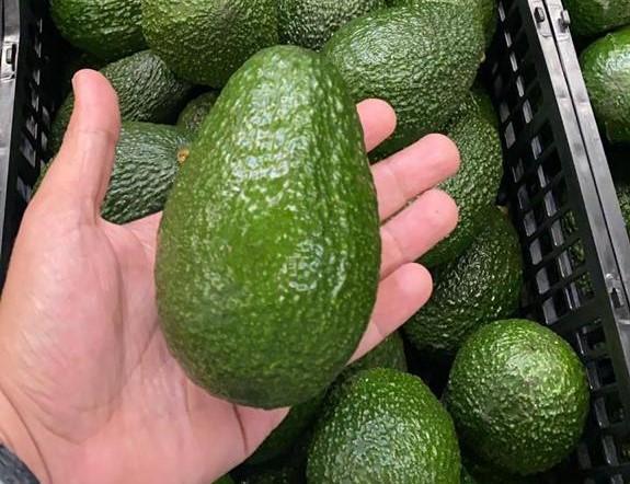 Mexico Fresh Avocado - Mexico-Avocado-833561.jpg