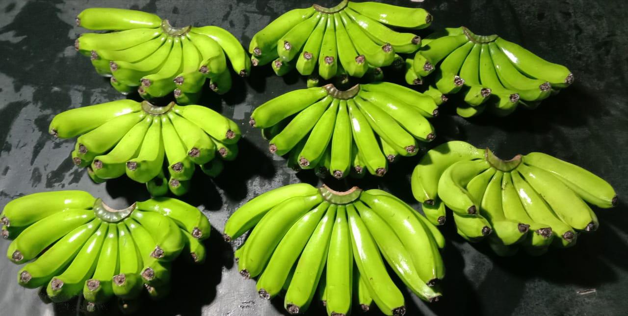 Philippines Fresh Banana - WhatsApp_Image_2021-05-12_at_7.30.48_PM_1_Edit.jpg