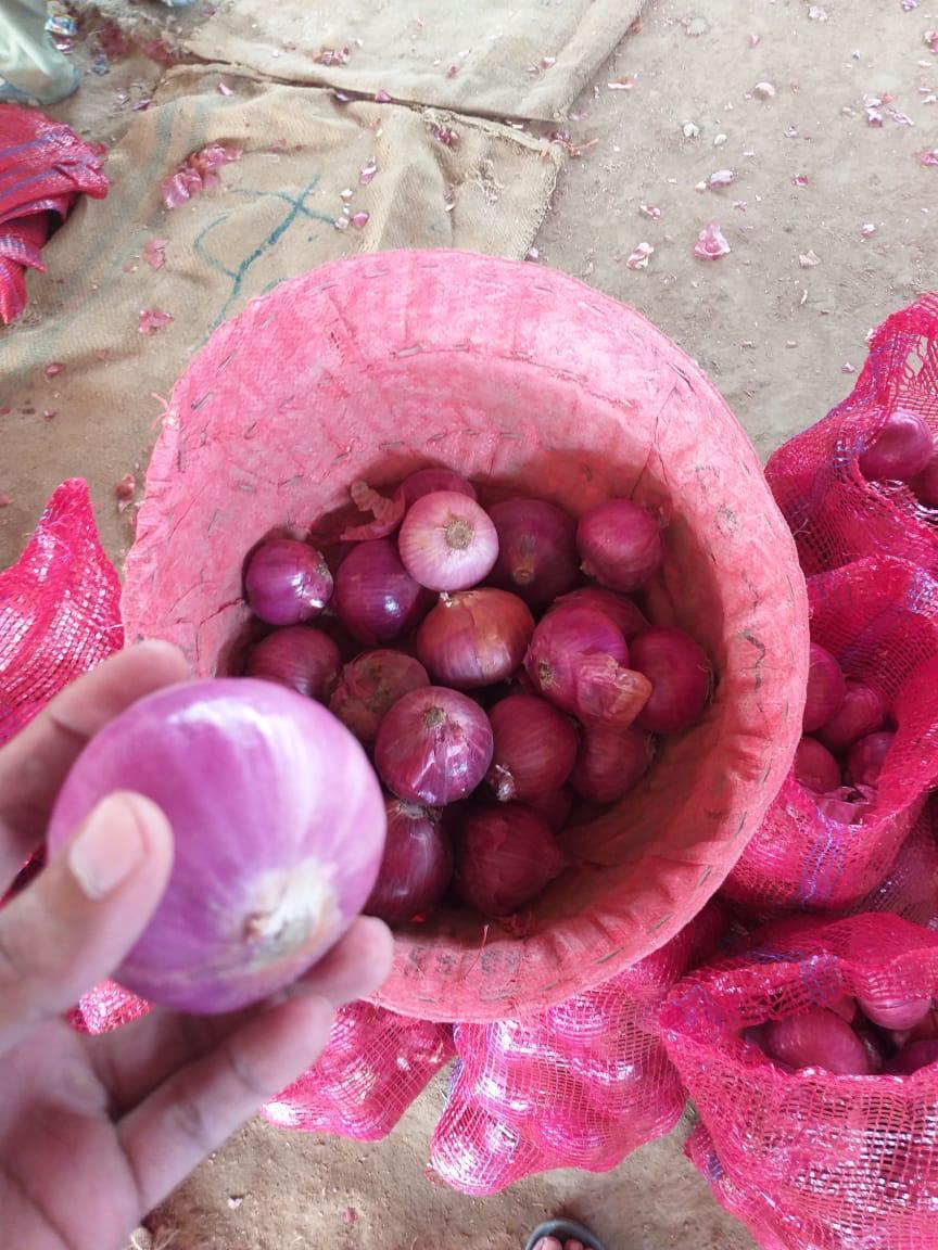 Pakistan Fresh Onion - WhatsApp_Image_2021-07-09_at_4.55.09_PM_1.jpeg
