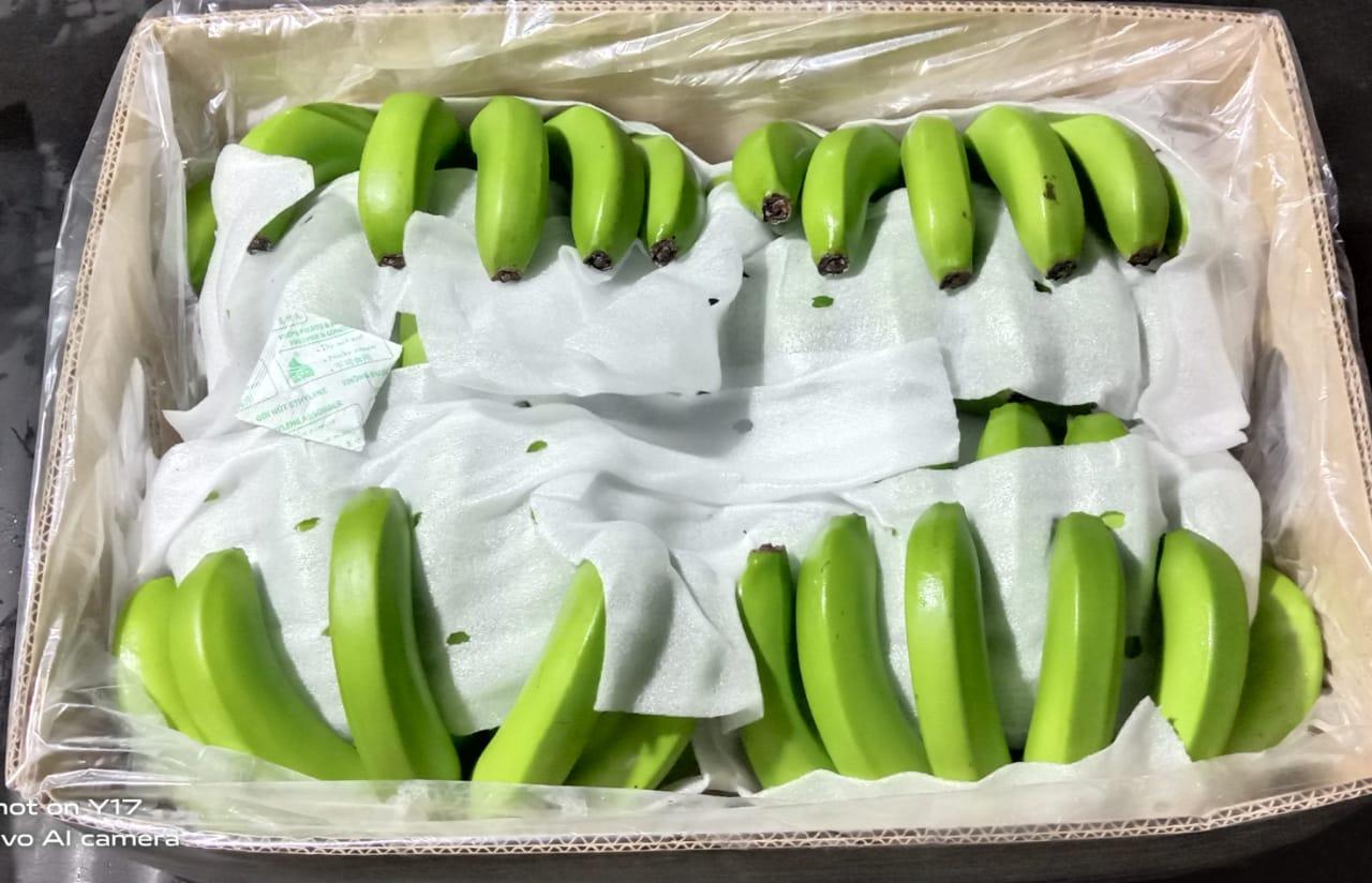 Philippines Fresh Banana - WhatsApp_Image_2021-05-12_at_7.30.46_PM_1.jpeg