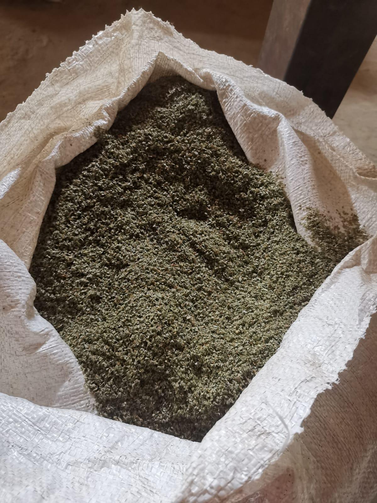 Egypt Mint - pepermint_1.jpeg