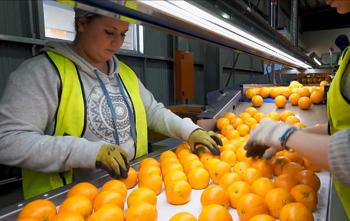 Australia Fresh Orange - 6.PNG