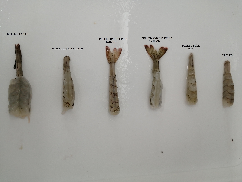 Ecuador Fresh Vannamei Shrimp - Shirmp_1.jpg