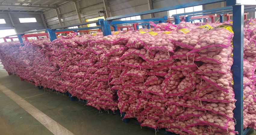 China Fresh Common Garlic - China_Garlic11.jpg