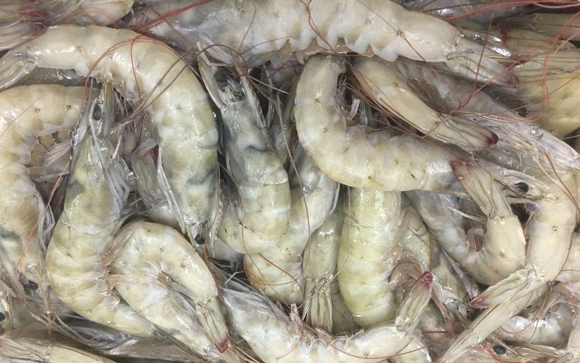 Ecuador Fresh Vannamei Shrimp - Shrimp_Ecuador.jpeg