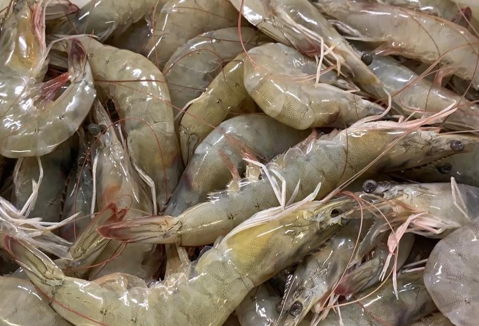 Ecuador Fresh Vannamei Shrimp - W1.jpeg