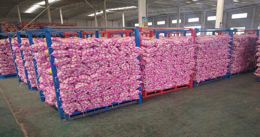 China Fresh Common Garlic - China_Garlic12.jpg