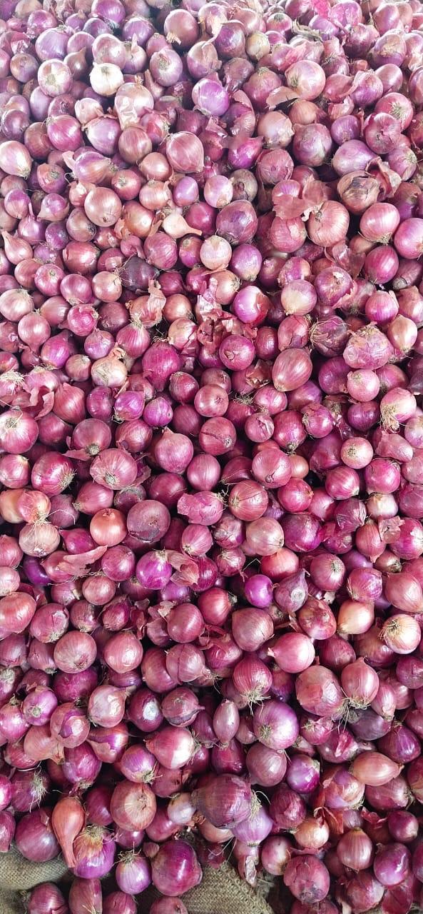 Pakistan Fresh Onion - WhatsApp_Image_2021-07-09_at_4.55.11_PM.jpeg