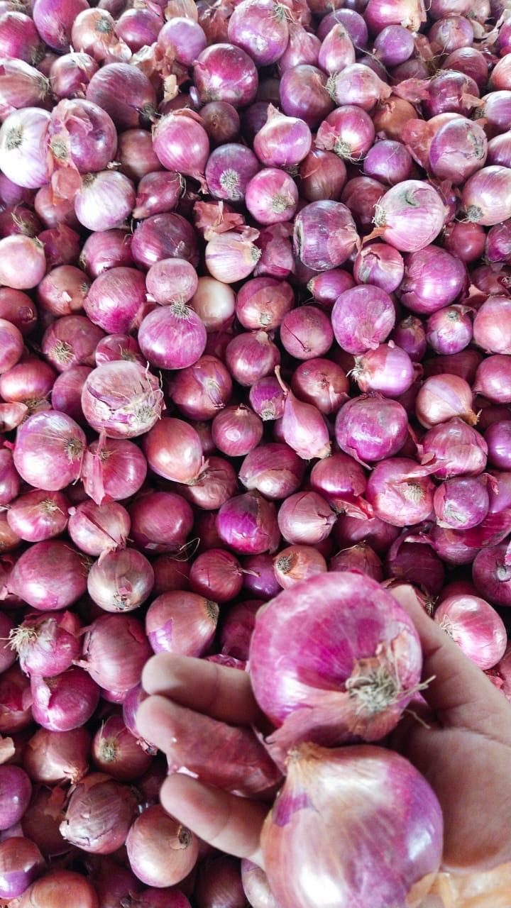 Pakistan Fresh Onion - WhatsApp_Image_2021-07-09_at_4.55.12_PM.jpeg