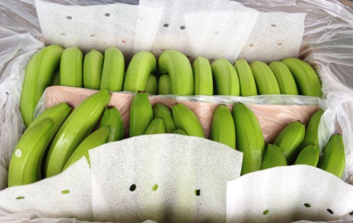 Ecuador Fresh Banana - 4.JPG