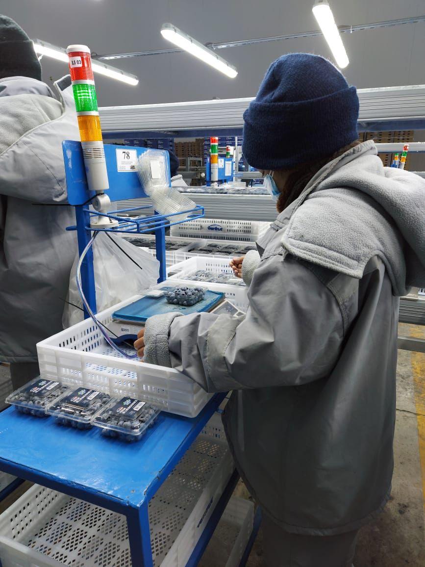 Peru Fresh Blueberry - WhatsApp_Image_2021-09-28_at_19.03.26.jpeg