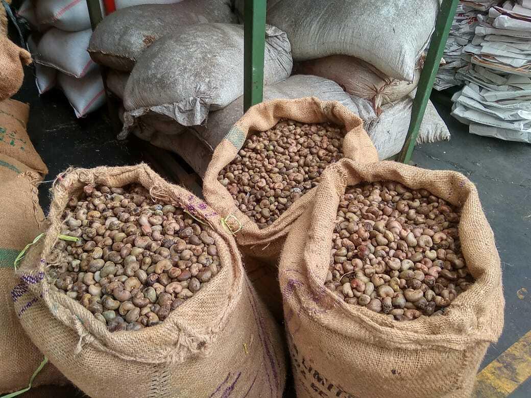 Indonesia Raw Cashew Nut - RCN-02.jpeg