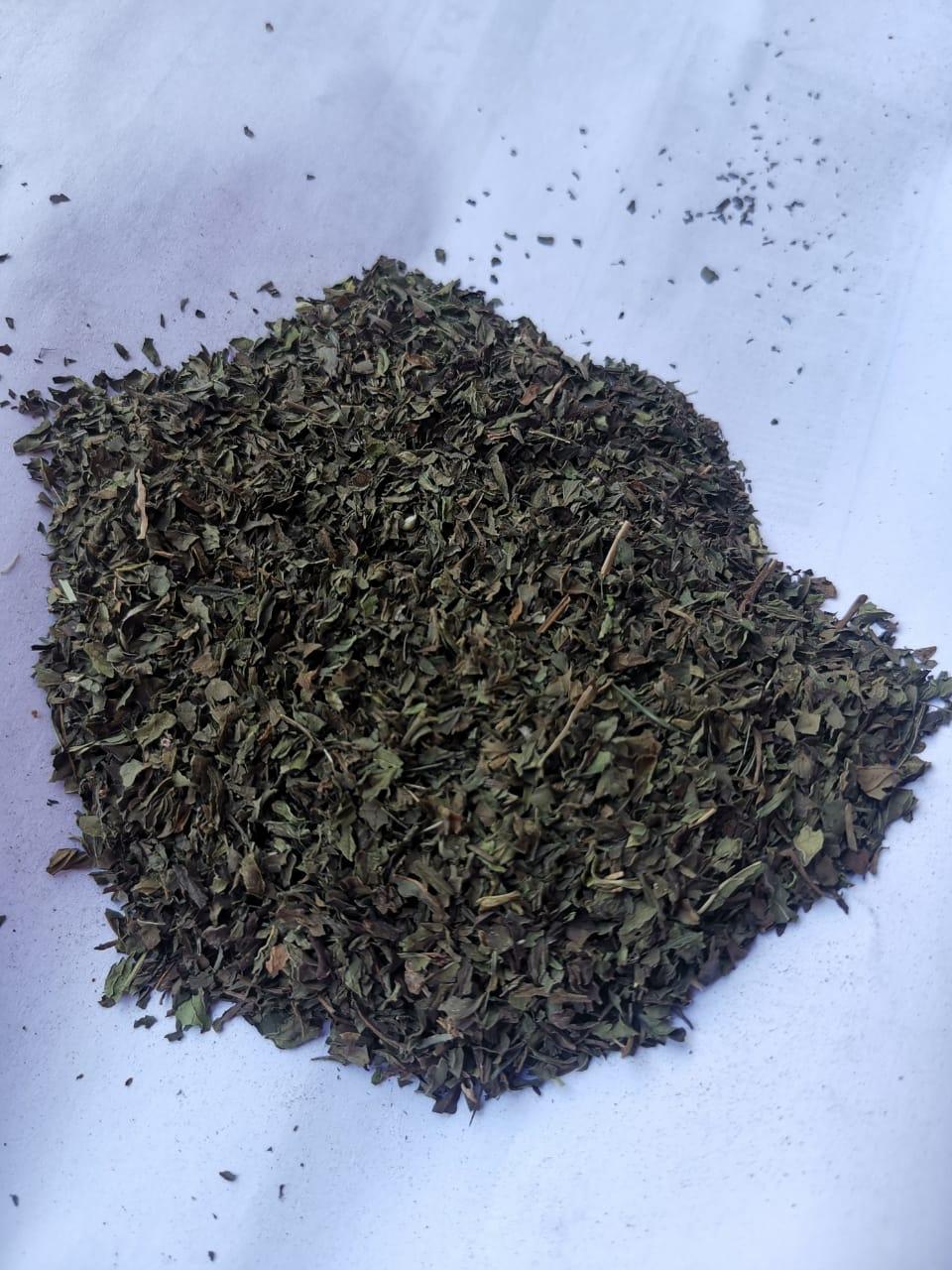Egypt Mint - peppermint_1.jpeg