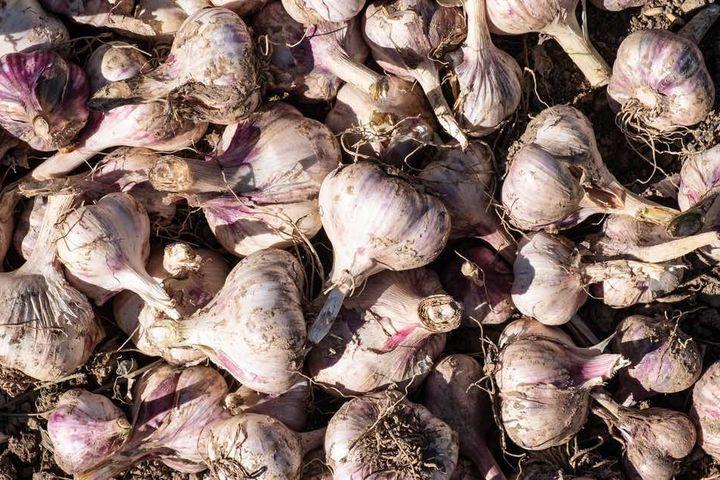 China Fresh Common Garlic - China_Garlic.jpg