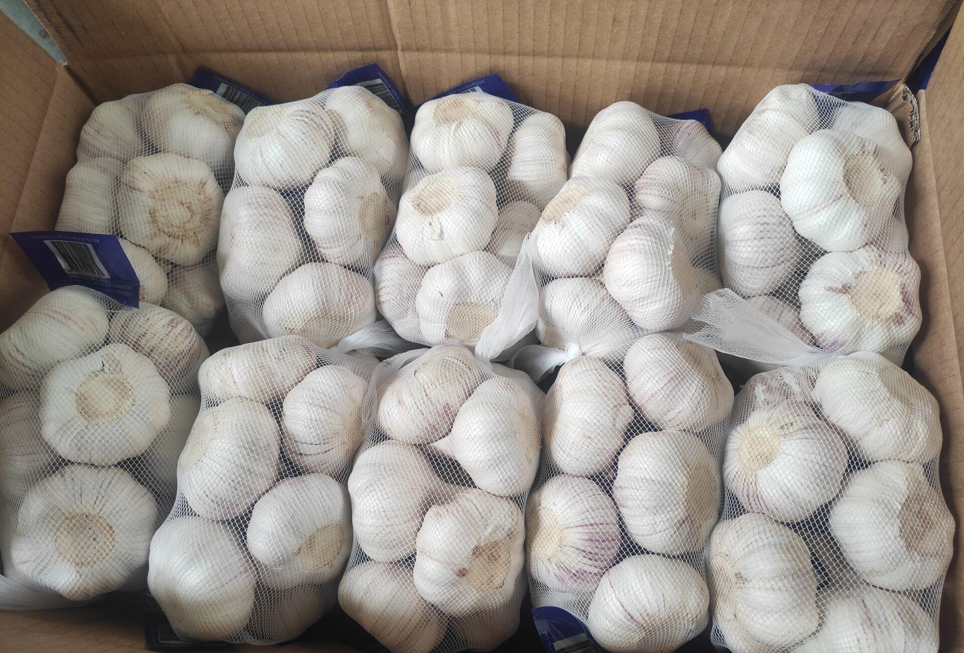 China Fresh Common Garlic - China_Garlic_5.jpg