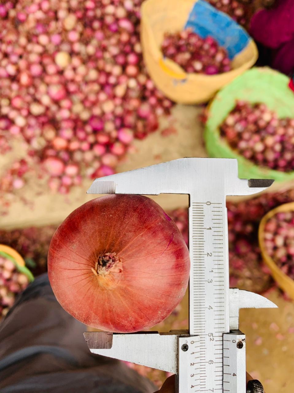 Pakistan Fresh Onion - WhatsApp_Image_2021-07-09_at_4.55.15_PM_1.jpeg