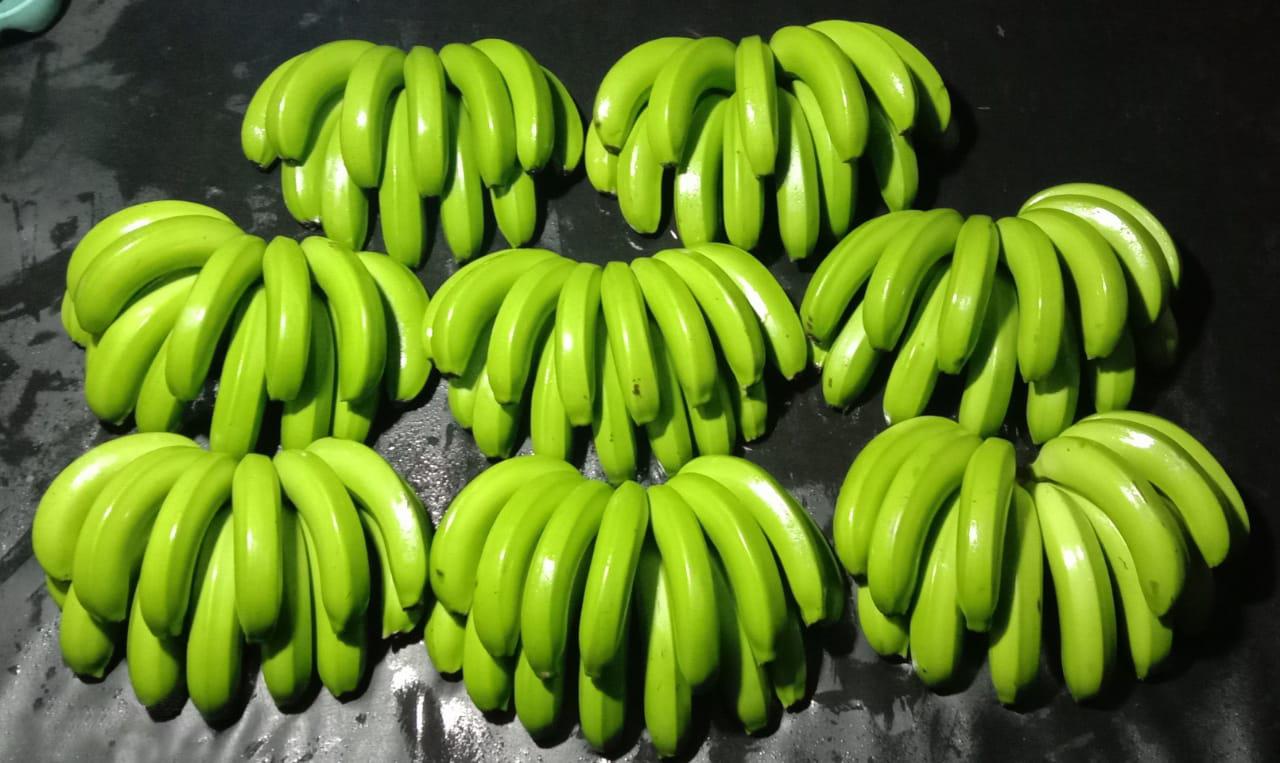 Philippines Fresh Banana - WhatsApp_Image_2021-05-12_at_7.30.47_PM_Edit.jpg
