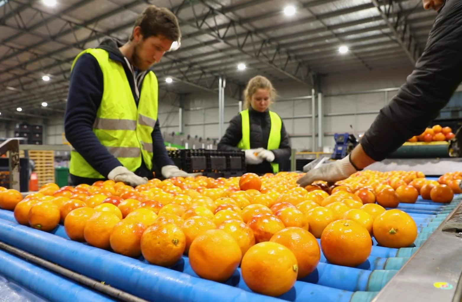 Australia Fresh Orange - 9.PNG