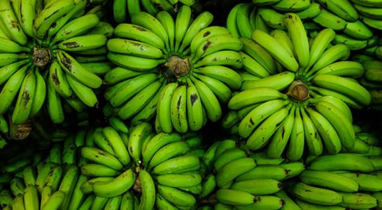 Philippines Fresh Banana - f942c7560.jpg