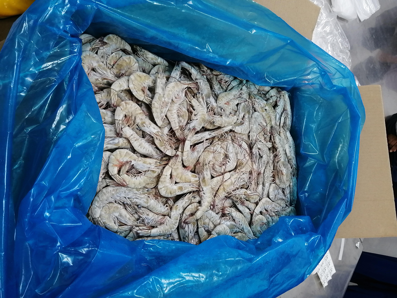 Ecuador Fresh Vannamei Shrimp - Shirmp_Ecuador_8.jpeg