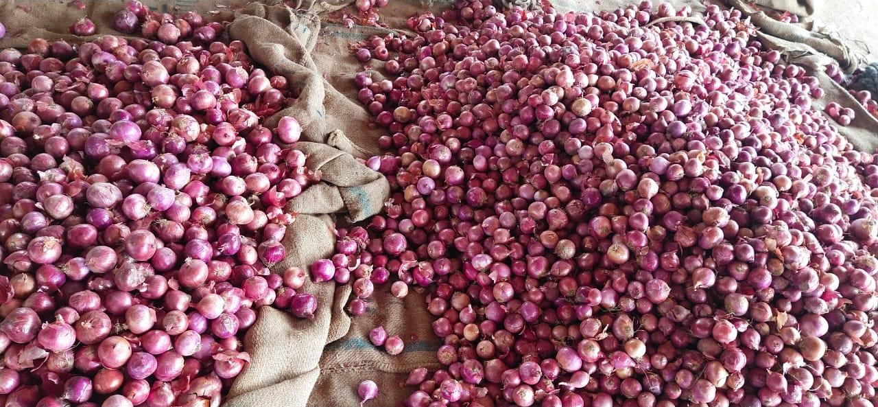 Pakistan Fresh Onion - WhatsApp_Image_2021-07-09_at_4.55.10_PM_1.jpeg