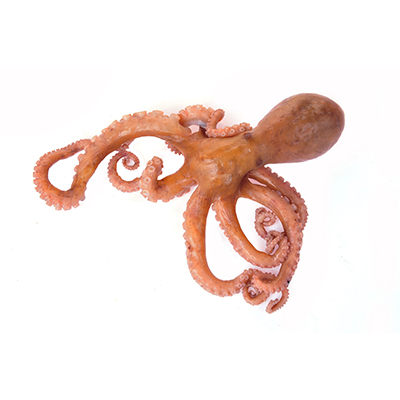 Market Intelligence of North Pacific Giant Octopus in South Korea