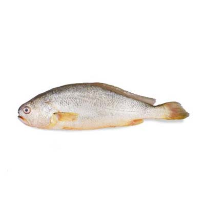 Yellow Croaker (Frozen) suppliers, wholesale prices, and global