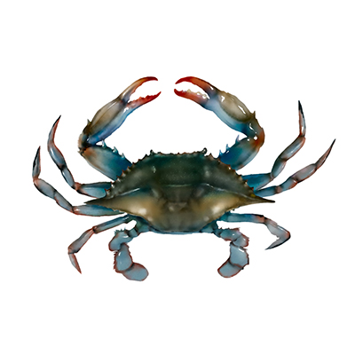 Blue Crab global import and top importing countries - Tridge