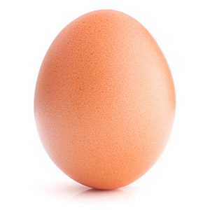 Brazil Chicken Egg suppliers, wholesale prices, and market