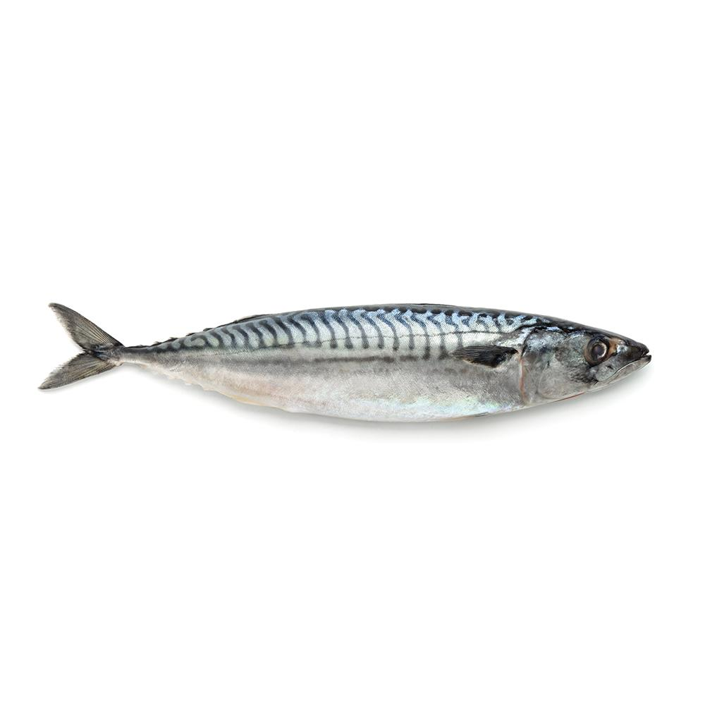 Market intelligence of Mackerel in the Spain