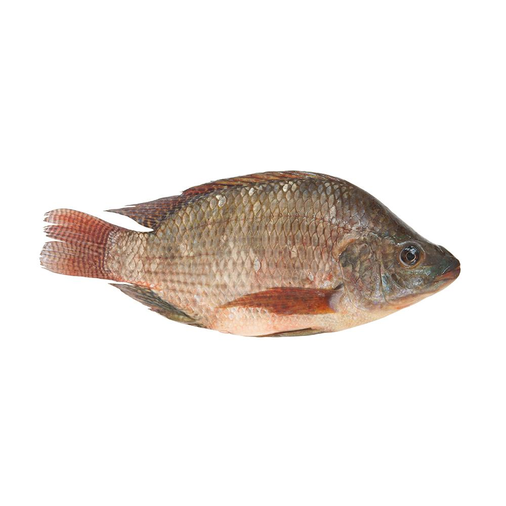 Market intelligence of Tilapia in the China
