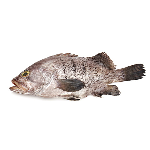 Market intelligence of Grouper in the China