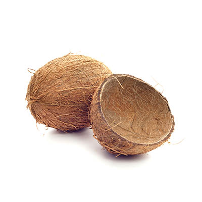 Coconut Shell global import and top importing countries - Tridge