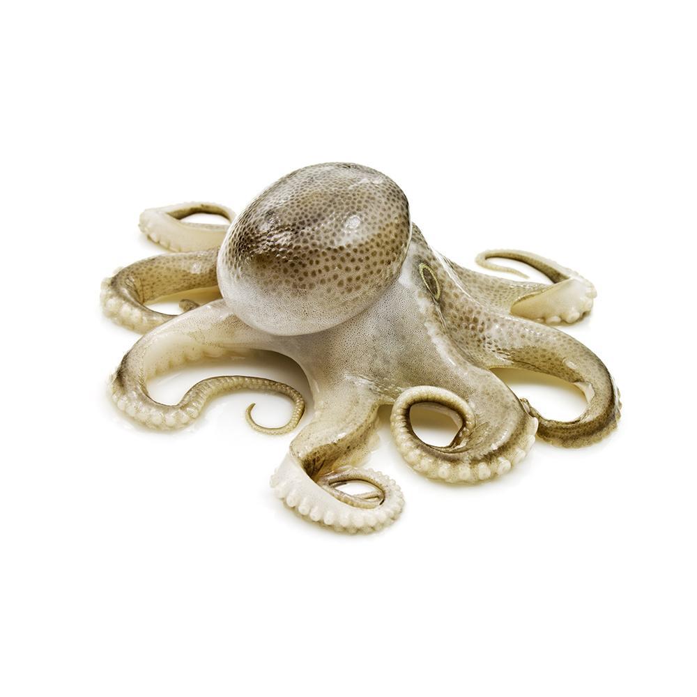 Market intelligence of Octopus in the Spain