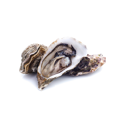 Market intelligence of Oyster in the China