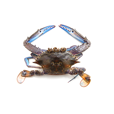 Flower Crab global wholesale market prices - Tridge