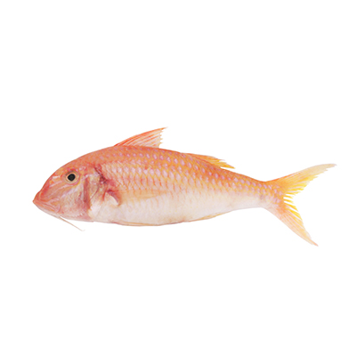 Red Mullet global wholesale market prices - Tridge