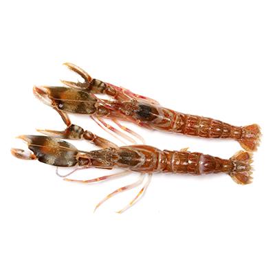 Market Intelligence of Lobster