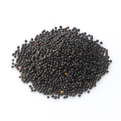 Canola Seed & Rapeseed Prices & Offers, Suppliers, News, and More ...