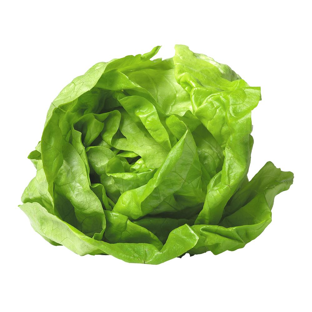 Market Intelligence of Lettuce