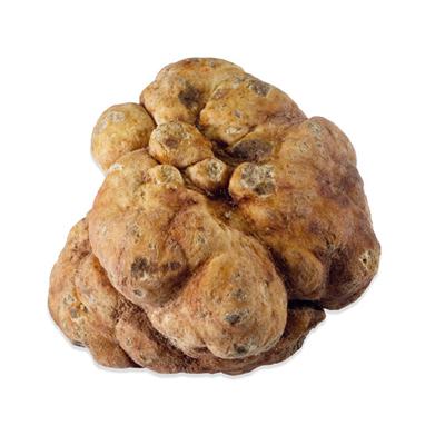 Market intelligence of Truffle in the American Samoa