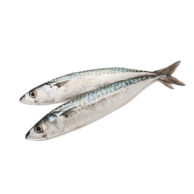 Market Intelligence of Blue Mackerel in South Korea