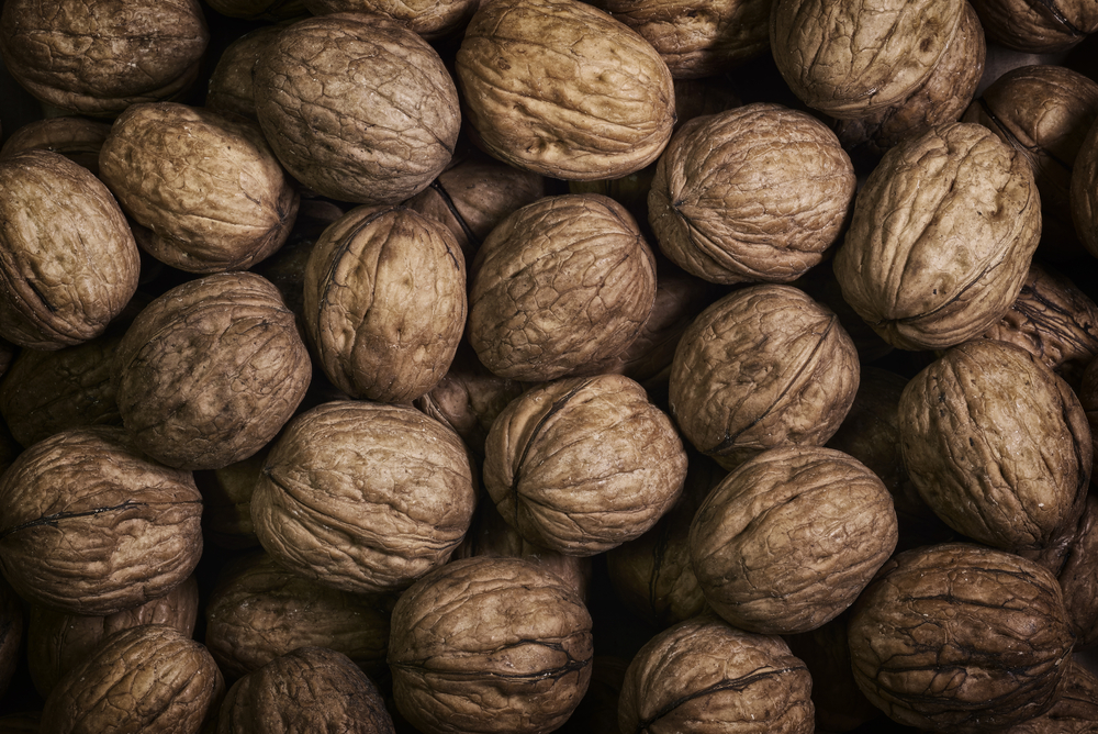 Tridge Market Update] Walnut: Production Stays Low and Chile to